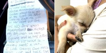 Woman Found Puppy Abandoned In Airport Bathroom And Reads Owner's Note About Boyfriend's Abuse