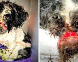 Dog Nearly Dies After Brute Seals His Mouth With Tight Rubberbands, Surgery Needed