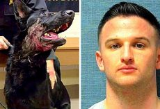Cops Looking For Owner Who Shot His Own Dog In The Face, Dumped Him In Woods