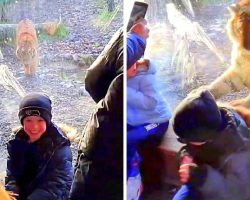 Scary Footage Shows Zoo Tiger Trying To Stalk & Attack 2 Kids On The Same Day