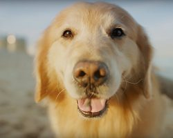 $6 Million Superbowl Ad Runs Today By Dog Owner To Thank His Vet For Saving His Dog's Life