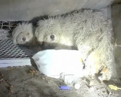 Abandoned Dog Shields His Sister After They Were Cruelly Dumped In A Sewer