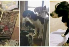 Couple Starves & Tortures 51 Dogs, Judge Lets Them Off With Probation
