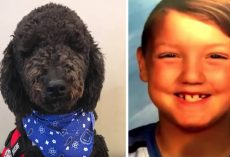 Woman Gets Rid Of Autistic Boy's Service Dog, Then Kid Goes Missing Days Later
