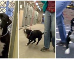 Shelter Dog's Reluctant To Leave Kennel Til He Finds Out He's Never Going Back