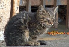 Blind Kitten Sits In Parking Lot Every Day, Waiting For Someone To Guide Her