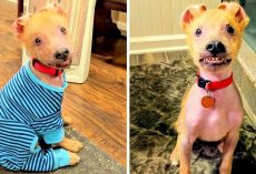 "Breeder Rejected A ""Defective"" Puppy, But His Permanent Smile Won Over A Woman"