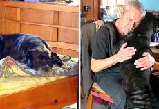 Dog Senses That Dad Is Having A Heart Attack In His Sleep, Rushes To Save Him