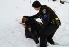 Cop Comforts Pup Hit By Car, Drapes His Jacket Over Her While They Wait For Help