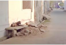 They Walk Passed Dog At Death's Door Each Day But Have Yet To Stop & Help