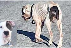 Decaying Skeletal Dog Roamed The Streets, Not Knowing What Day Would Be His Last