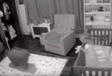 Dog Enters Child's Room During The Night To Help Put Fussy Toddler Back To Sleep