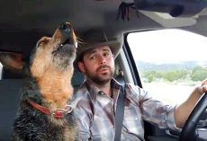 Country-Loving Dog Can't Resist Singing Along Whenever Her Favorite Song Comes On