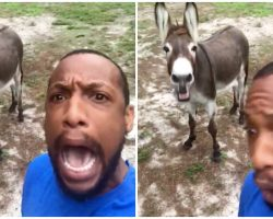Guy Begins Singing 'Lion King' Song, Donkey Walks Up Behind Him & Joins In