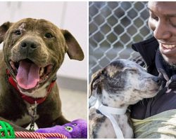 Dogs Rescued From Earthquakes In Puerto Rico Are Now Looking For Homes In U.S.