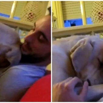 Lab Feels Guilty For What He's Done, Apologizes To His Human In Sweetest Manner