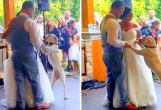 Dog Feels The Love On Mom & Dad's Wedding Day, Joins Them For The First Dance