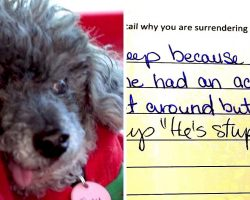 "Senior Blind Dog With Brain Tumor Gets Dumped, Vile Owner Says ""He's Stupid"""