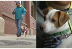 Man Out For Walk Demands Answers After His Dog Is Electrocuted On Manhole Cover