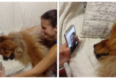Grandma Goes On A Trip And Distressed Dog 'Pleads' On FaceTime To Come Home