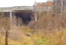 Man Follows A Stray To Abandoned Building, Sees Dogs Chained Up All Over