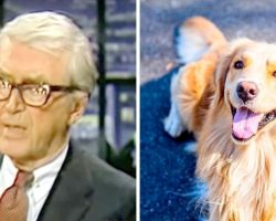 Jimmy Stewart's Poem About His Dead Dog Broke Our Hearts Into A Million Pieces
