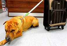 Dog Dumped With Suitcase At Train Station Kept Waiting But Owner Never Came Back