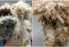 Black-Souled Owner Kept Him Under A Bed For 2-Yrs, Knowing He Was In Agony