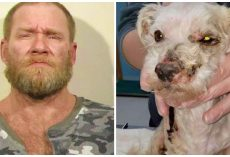 Man Pours Toxic Lye All Over Senior Dog, Lets Him Writhe 2 Days In Pain
