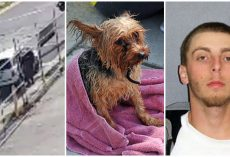 Thug Shoots Senior Dog To Death In Gutter & Drives Away, Gets 5 Years In Prison