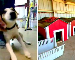 Highschoolers Build Dog Houses In Construction Class & Donate Them To Shelter