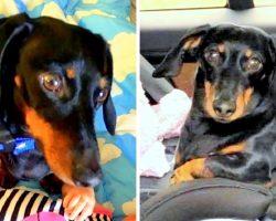 Car Stolen With Dog Still Inside, Heartbroken Family Offers $5k Reward For Dog