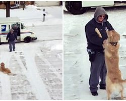 Golden Waits On Driveway Every Day To Get A Hug From His Beloved Mailman