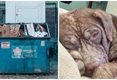 Dog That Appears To Have Acid Poured All Over Her Body Found In Dumpster