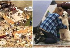 Mom & Dog Overwhelmed With Emotion Day After Tornado Tore Them Apart