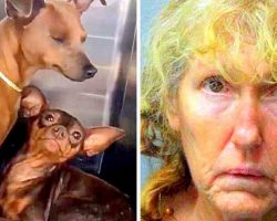 60-Yr-Old Woman Breeds & Tortures 70 Dogs, Holds Her 90-Yr-Old Husband Captive