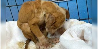 He Hunches Over In Pain As He Struggles To Breathe After Thug Dumped Him In Road