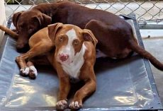 Overcrowded Shelter At Risk Of Euthanizing Their Dogs If They Aren't Adopted