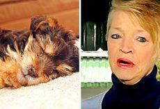 Sick Abuser Steals Elderly Woman's Innocent Dog, Kicks & Stomps Him To Death