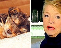 Sick Abuser Steals Elderly Woman's Innocent Dog, Kicks & Stomps Him To Death