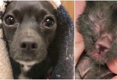 Pregnant Dog Left Behind, Then Orphan Kittens Find Themselves Without A Mom