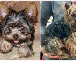 With Tears In Their Eyes, Family Holds Their Beloved Yorkie After 14 Years Apart