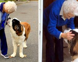 Giant Dog Befriends Lonely 95-Yr-Old Grandma Next Door & Makes Her Smile Daily
