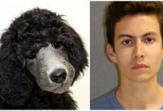 Angry Teen Goes On Rampage, Strikes Parents' Poodle With Wooden Dowel & Kills Her