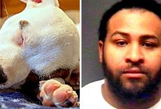 "Malicious Man Cut Puppy's Ears With Scissors, Used Superglue To ""Put"" Them Back"