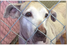 Unwanted Dog Waits 7-Years In Animal Shelter For Someone To Adopt Her