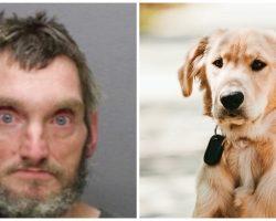Man Cusses At Woman's Service Dog & Kicks Him Hard In The Head