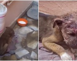 Stray Baby Slept In Alleyway On Dirty Mat When Mama Rejected His Infection