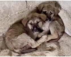 Sick Babes Huddle Together In Tight Corner After Being Left In Midst Of Night