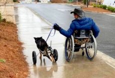 "Disabled Dog Kept Getting Returned To Shelter, Began To Feel Like A ""Burden"""